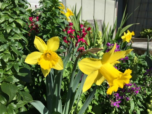 2-13_Flowers