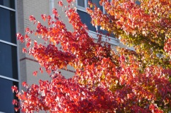fall-colors-by-college-bldg