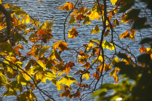 fall-leaves-by-river